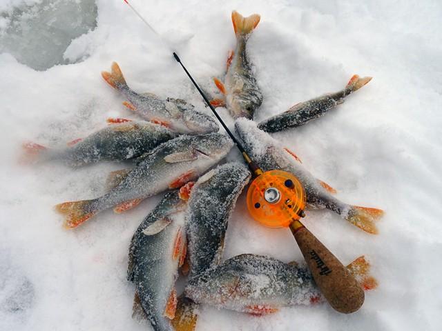připojte živé rybí návnady p o f seznamka